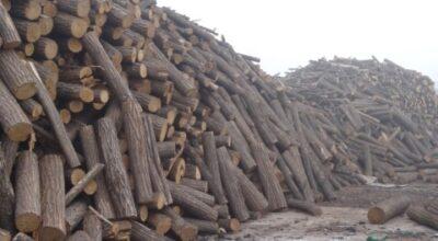 """FORDAQ: """"Ne  aflăm  la a  7-a  prorogare  a termenului de operaționalizare pentru SUMAL 2.0, sectorul forestier din România trăiește sub amenințarea blocajului"""""""